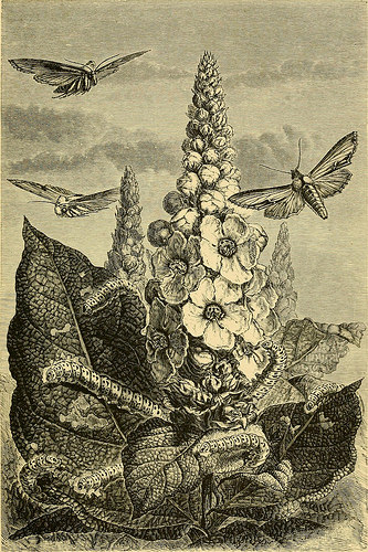 "Image from page 168 of ""The transformations (or metamorphoses) of insects (Insecta, Myriapoda, Arachnida, and Crustacea) : being an adaptation, for English readers, of M. Émile Blanchard's ""Metamorphoses, moeurs et instincts des insects"" and a compilatio"
